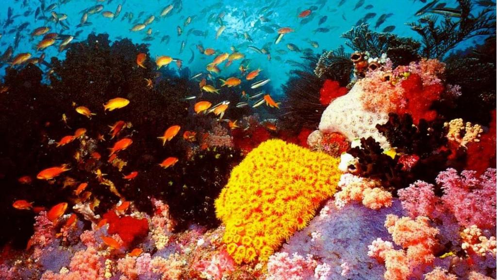 breat-barrier-reef2